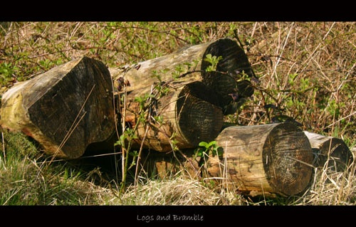 Logs and Bramble by bethcole