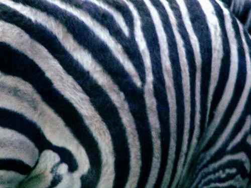 Zebra Crossing by Nandana