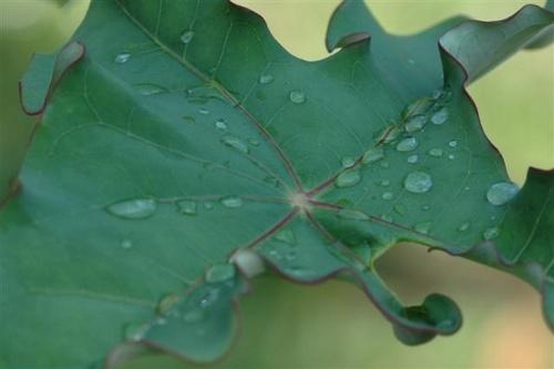 water on leaf by mariner