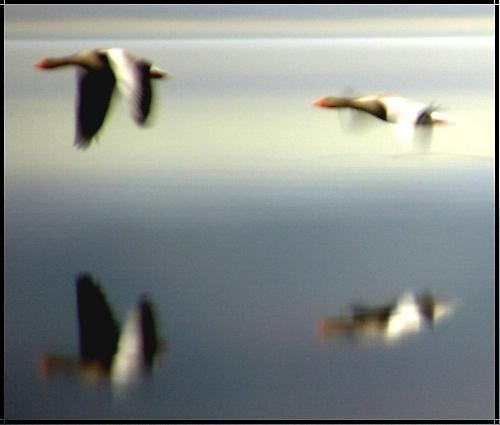 Reflections of flight by hsreid