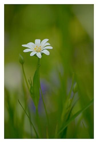 Wildflower by baker58