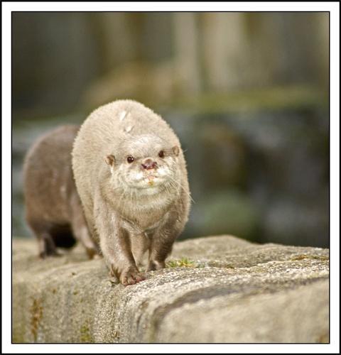 Otter by mttmwilson