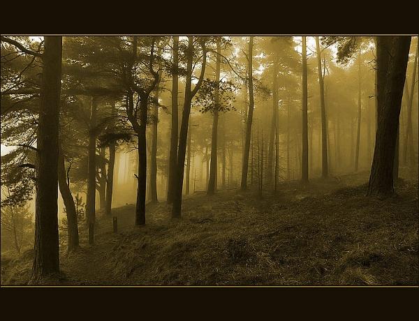 Misty Morn by proberts