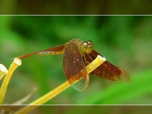 Dragonfly by sasam