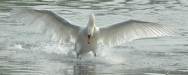 Sunlit landing by faulknerstv