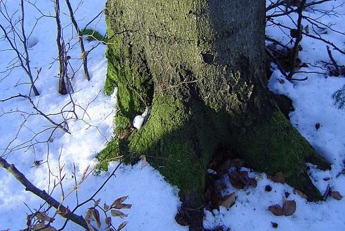 winter memories 2 by Poziomka