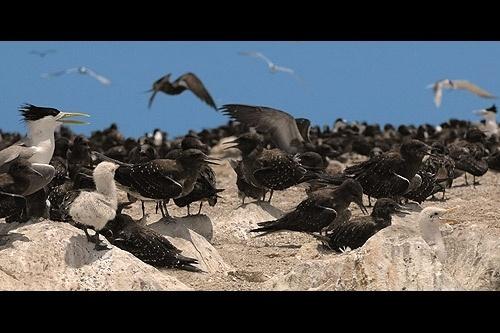 Bird\'s Isle by mariner