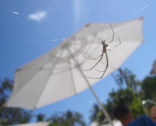 Spider by Kodak_Kid