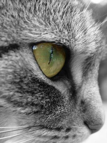Cats eye by lollydeakins