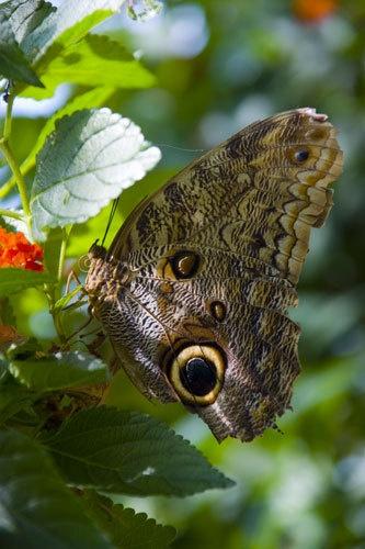 Butterfly by njsmith