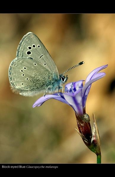 Blue Landing by celestun