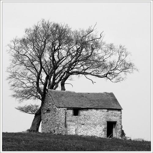 Barn & tree by Potto