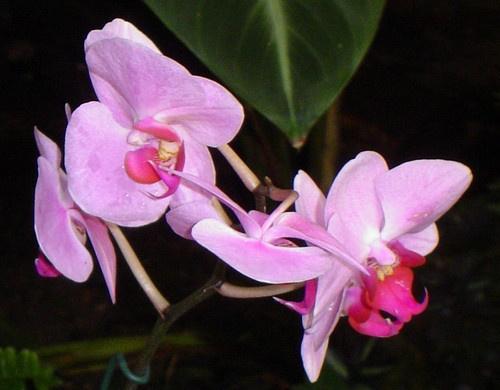 Very Pink by Poziomka