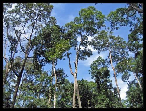 Borneo Jungle by Declan