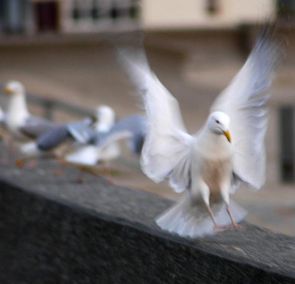 Angel or Pest! by Beardy