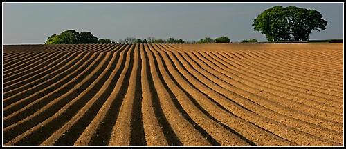 Field lines by Steve Cribbin