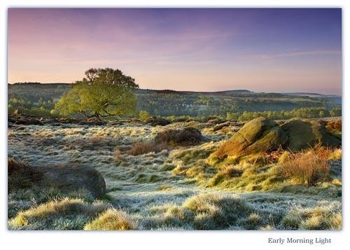 Early Morning Light by cdm36