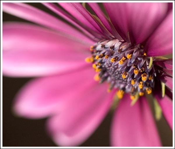Flower Close Up by mttmwilson
