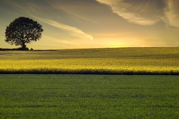 Landscape 2 by vince