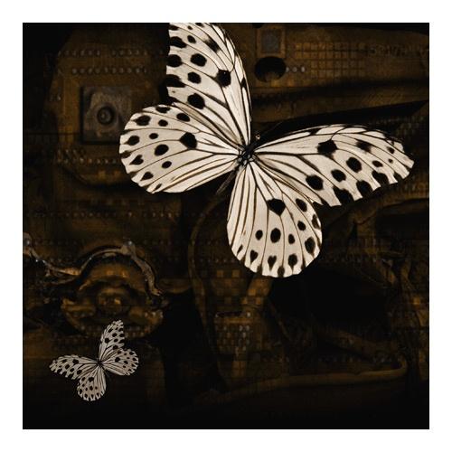 butterfly machine by mwatkins9801