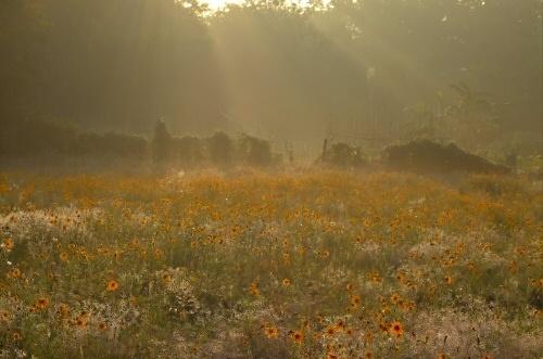 Foggy Morning by ustaosma