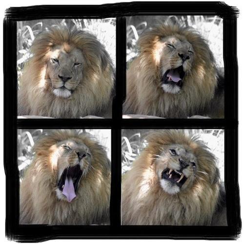 Evolution of a Yawn by liparig