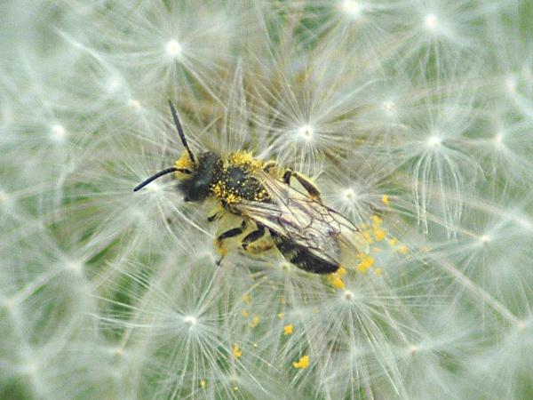 pollen by faulknerstv