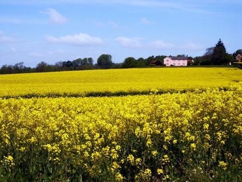Rural view by silburkp