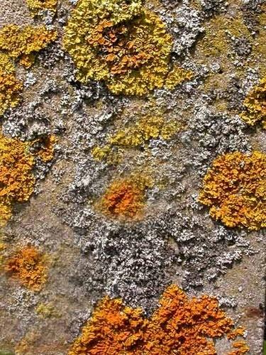Colourful Lichen by NorahF