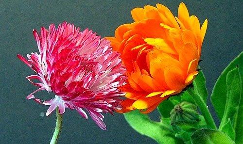 Pink & Orange by drewjr