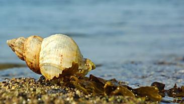 Shell2 by scotcav