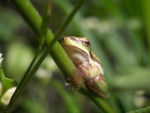Frog by danvan