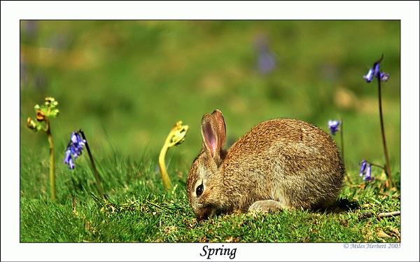 Spring by Miles Herbert