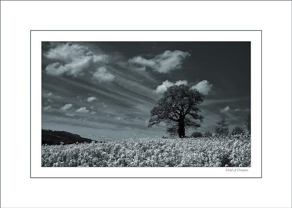 Field of Dreams by jules41