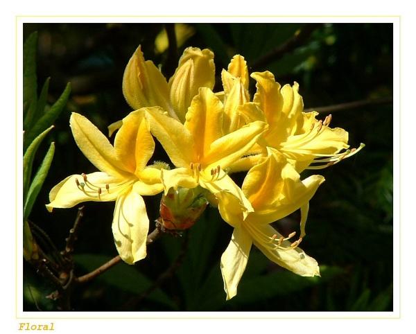 Floral by deltafour