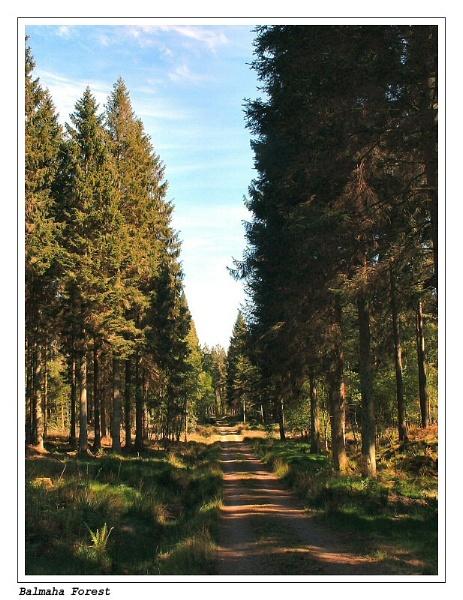 Balmaha Forest by deltafour