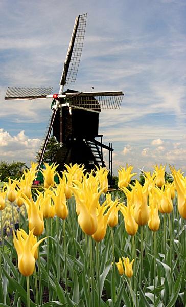 Delightfully Dutch by conrad
