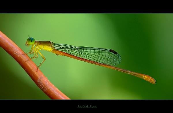 Jade Eye by suleesia