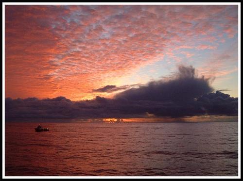 Monarch Sunset II by Scotty