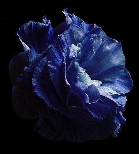 Just a bit Blue by cattyal