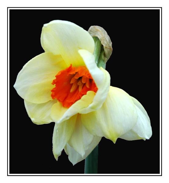 Flower 1 by Beardy