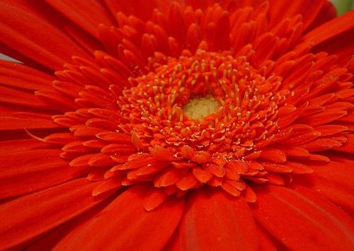 Macro Flower by keppy