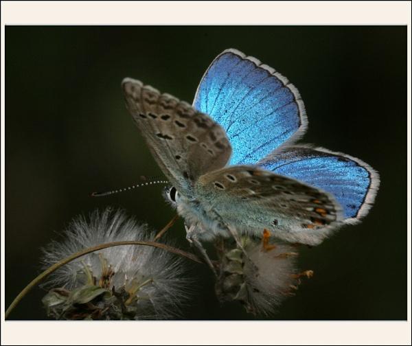 Blue Nights by celestun