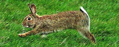Speeding bunny by Baz Hilder