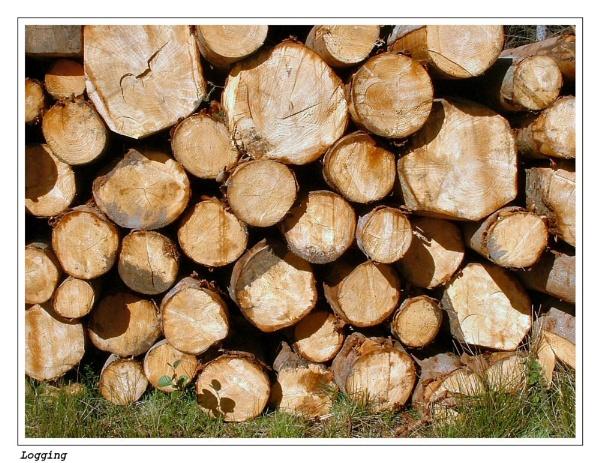 Logging by deltafour