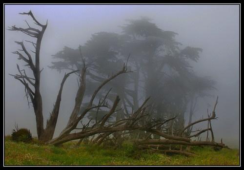 Spooky Trees - Part II by liparig