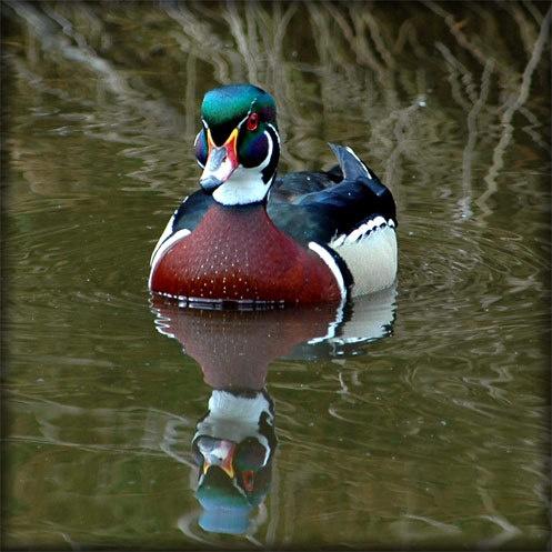 Duck 2 by Keith-Mckevitt