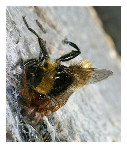 bee for tea again by smarjoram