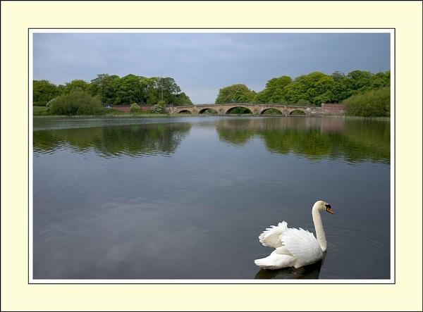 Swan Lake by damianlinley