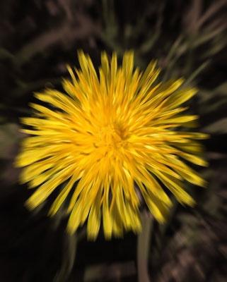Yellow Flower by ian_w
